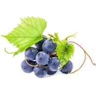 winogronowiec